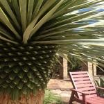 pool-yucca-chair