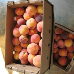 Fresh Texas Peaches