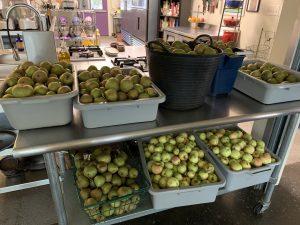 Summer 2019 Apple Harvest