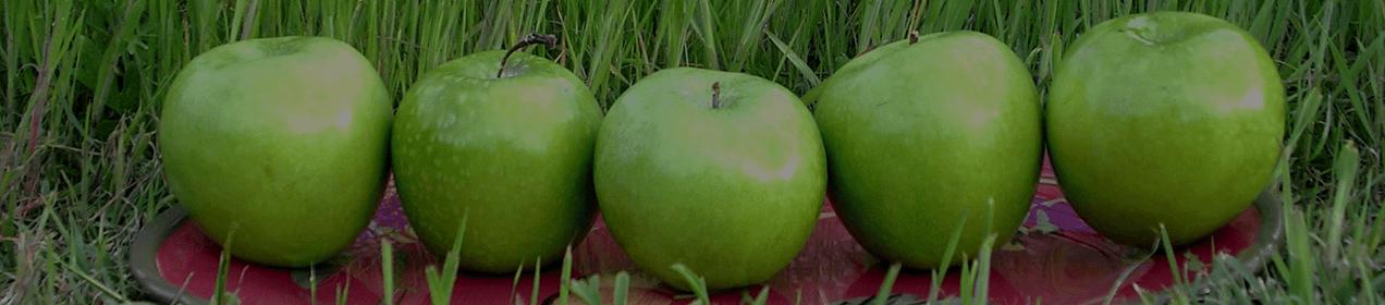 Apples at Juniper Hills Farm